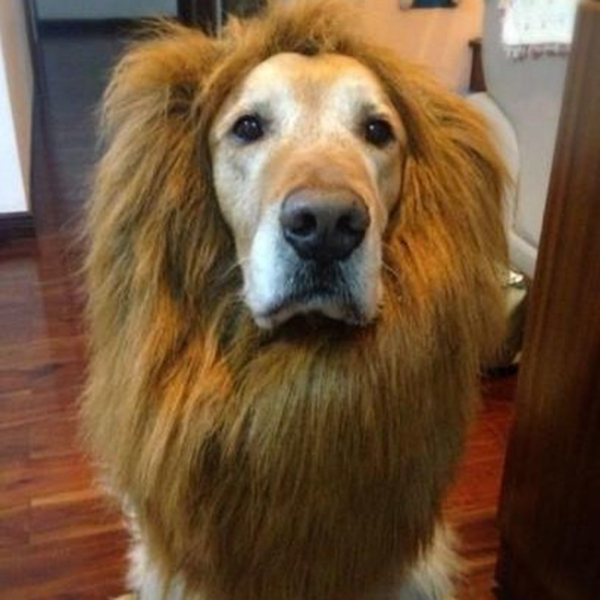 Lion-Mane-Wig-Cat-Fancy-Dress-Up-Clothes-for-Large-Dogs-Halloween-Pet-Costume